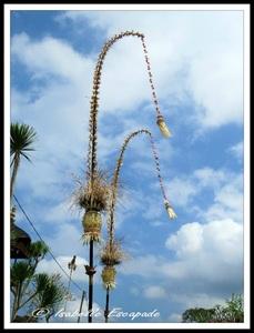 06 Août 2014 - Ubud... les rizières toujours trop belles...