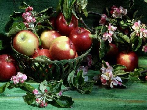 http://img45.xooimage.com/files/d/5/1/florapommesfleursdepommier-14e6138.jpg