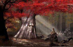 Résultats de recherche d'images pour «bois sacré barral»