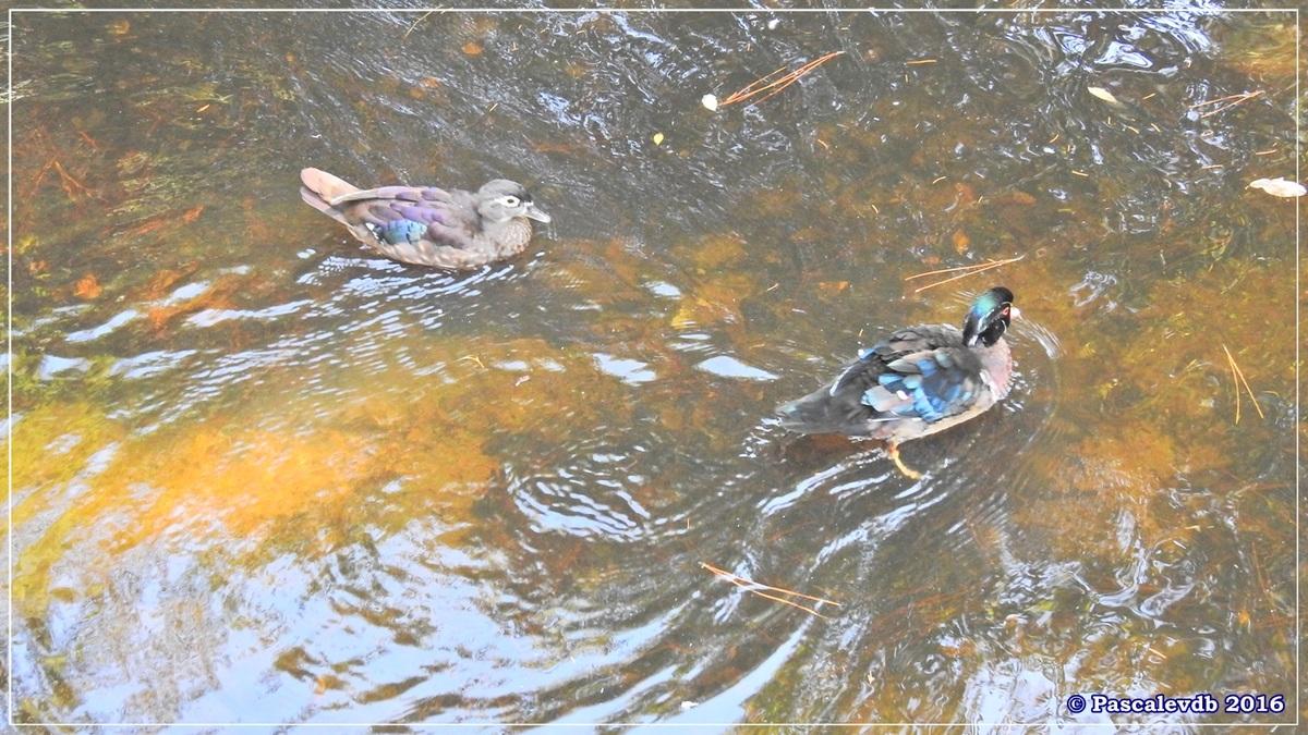 Zoo du Bassin d'Arcachon - Août 2016 - 1/15