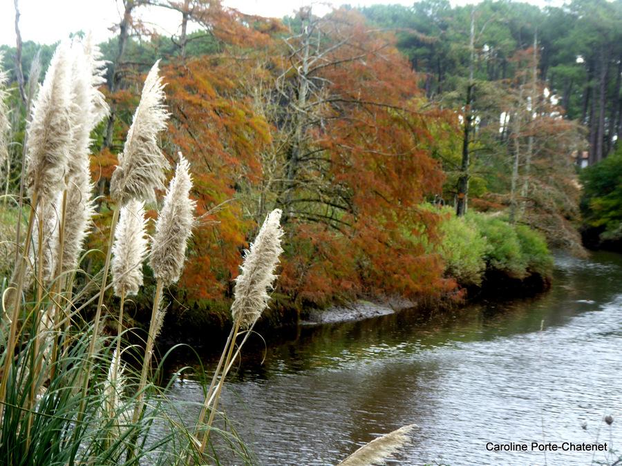 *L'automne au bord su Courant*