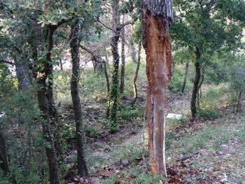 Un tronc d'arbre mort dépouillé de son écorce par les champignons et/ou les insectes