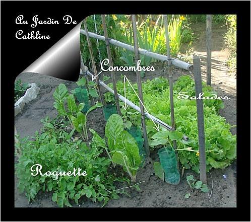 roquette-blettes--concombres-et-salades.jpg
