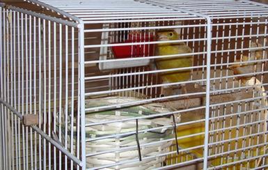 Nos oiseaux : photos récentes