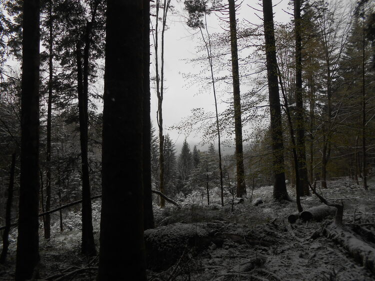 Vosges- the last snow