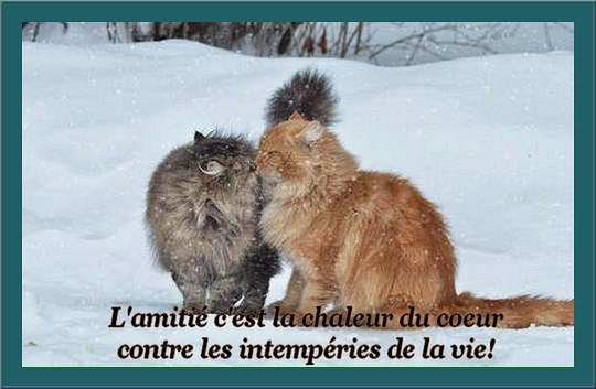 Chats ... Images - 6