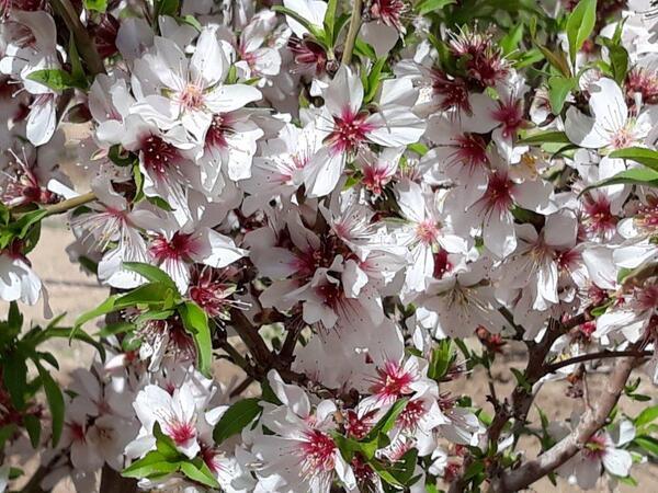 Que de belles fleurs