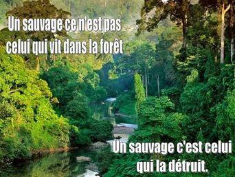 Aimons la nature ...