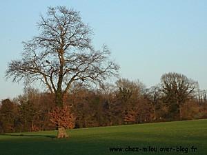 forêt janvier 201107