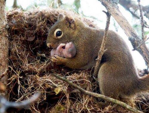 Des mamans tendresse