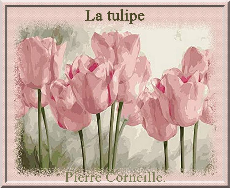 """La tulipe""  poème de Pierre Corneille"
