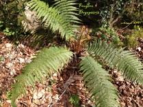 Chapitre 6: le peuplement d'un milieu par les végétaux
