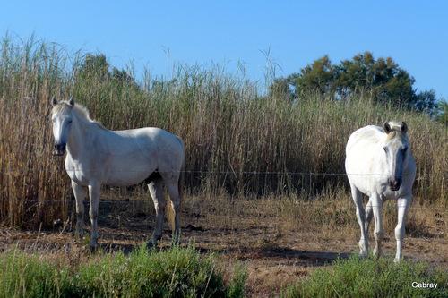 Les trois chevaux !