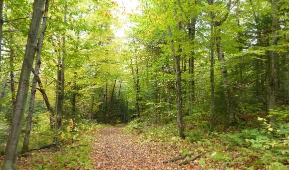 Découverte nature et champignons