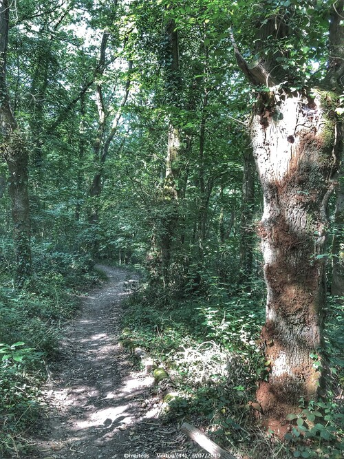 Forêt de Touffou - Vertou (44)