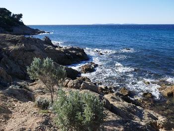 Barbes de Jupiter sur le sentier littoral. Au fond, les îles du Levant et de Port-Cros