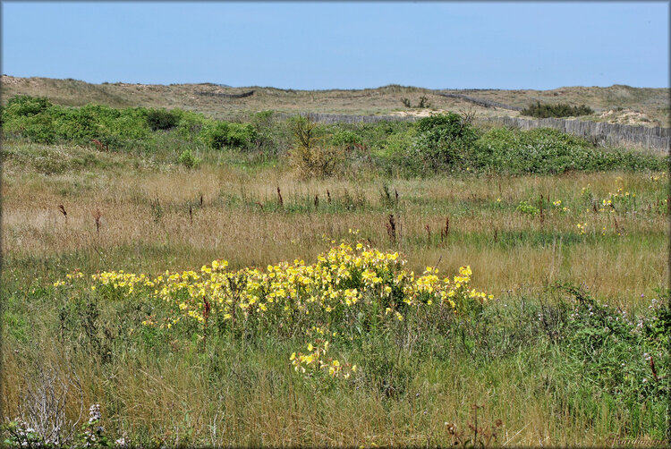 Les dunes de la Baie de l'Aiguillon en Vendée