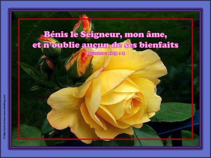Bénis le Seigneur, mon âme, et n'oublie aucun de ses bienfaits - Psaumes 103 : 2