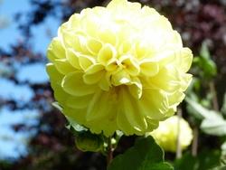 """mon plaisir """"le jardin"""" été 2012"""