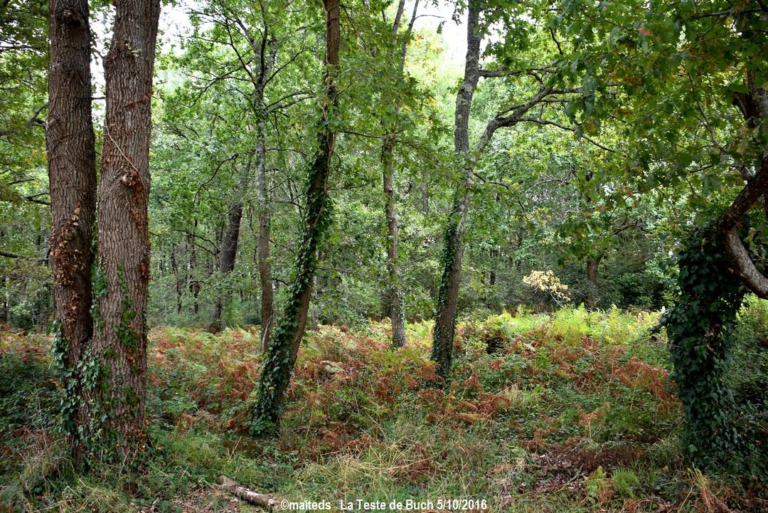 La Teste de Buch - Gironde (2)