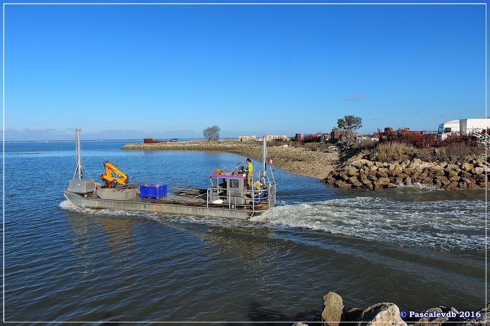 Port du Rocher et près salés est - La Teste de Buch - Février 2016 - 1/12