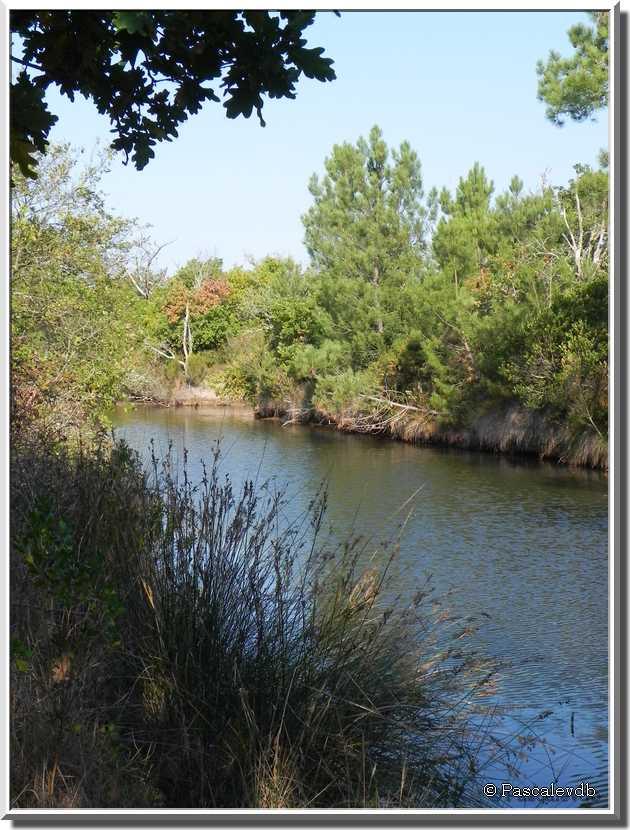 La réserve naturelle des près salés d'Arès