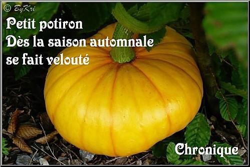 N11-Potiron-A.jpg