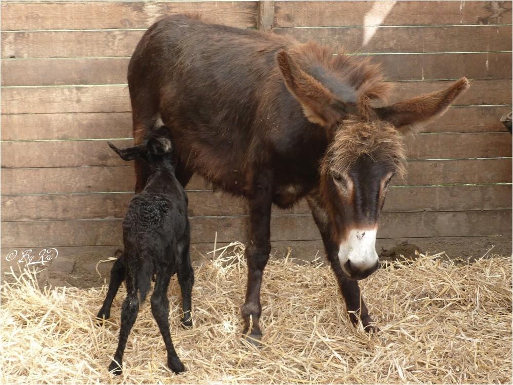 Carnet Rose à Donkey Land ...