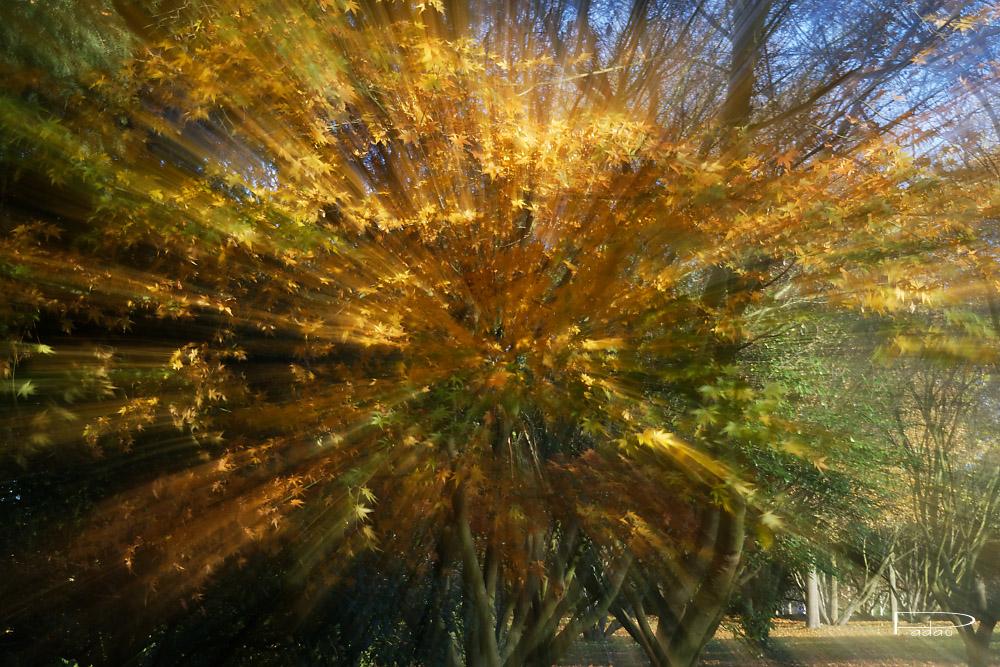 Dernières feuilles