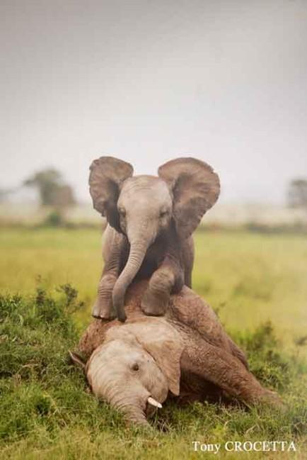 elephants-1702.jpg