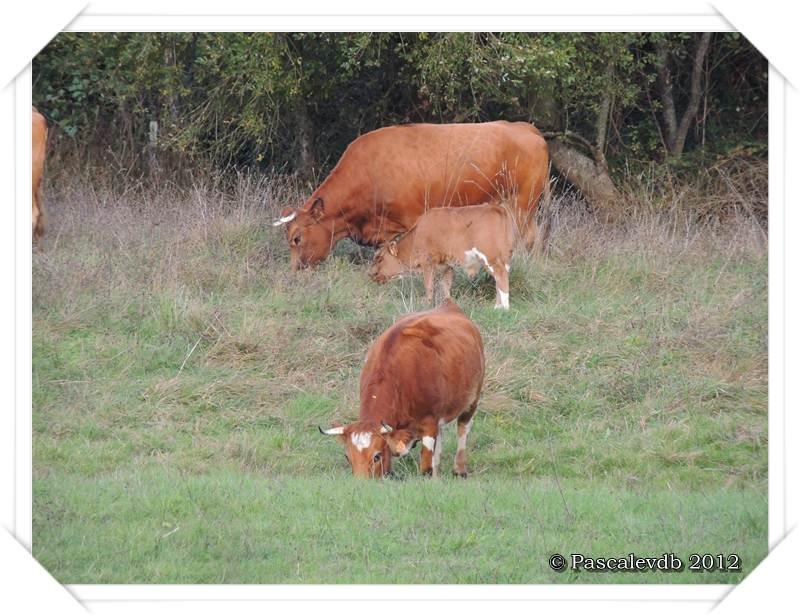 Balade d'automne aux marais de Bruges - 2/2