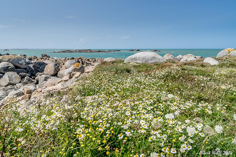 Bretagne 2014 - Fleurs et plantes