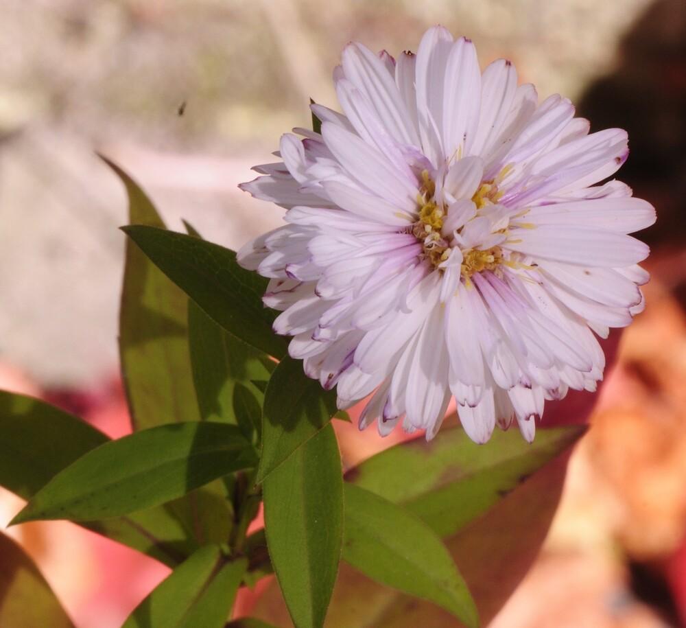 Encore une p'tite fleur