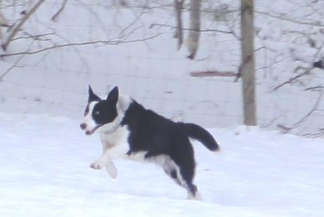 Tina seule dans la neige