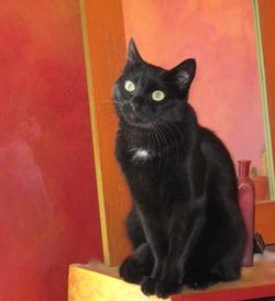 ADOPTEZ LÉO, 6 ans, extraordinaire chat ésotérique !