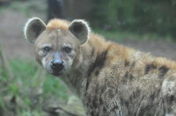 dierenpark amersfoort 2011 042