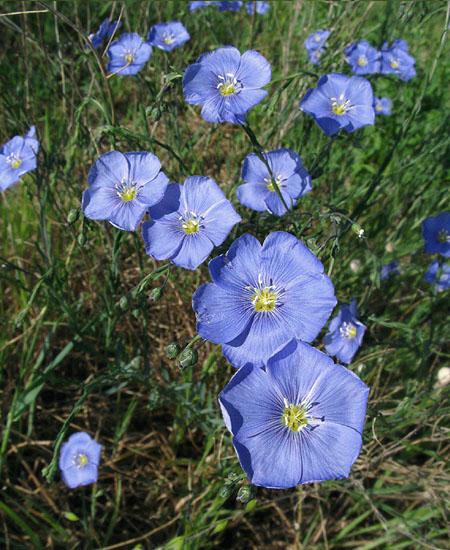 bleue41