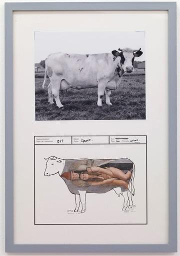 Des vaches dans le monde