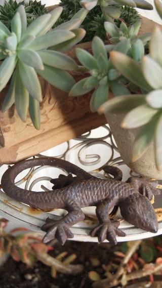 salamandre en fonte