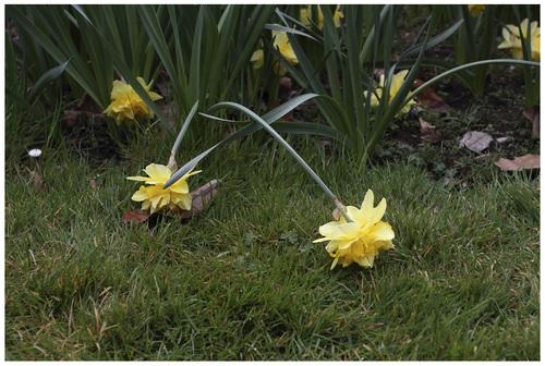 II L'allusion à Narcisse.