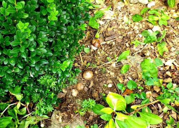 Un nid d'escargots ! En avez-vous déjà vu ?
