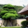 arbre contre un mur
