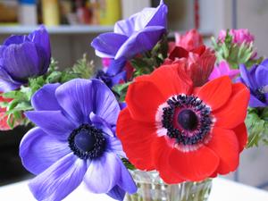 Les fleurs communiquent