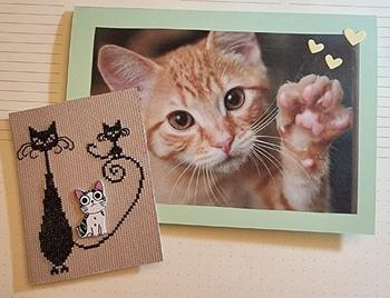Echange chat n°7 chez Sandrine