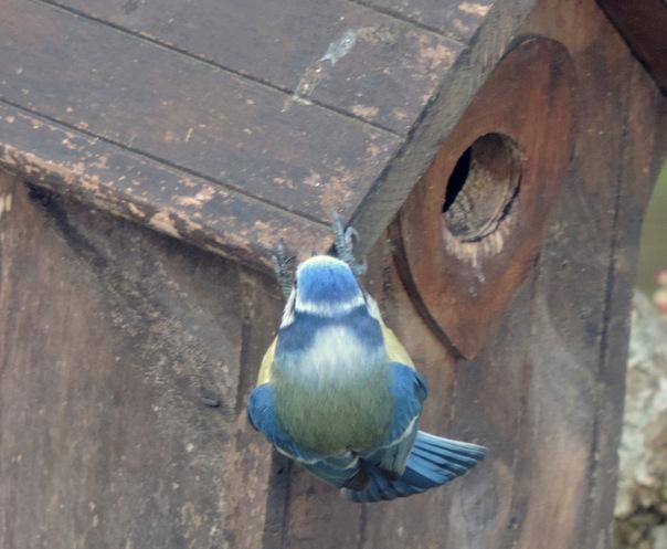 Les oiseaux dans le jardin...