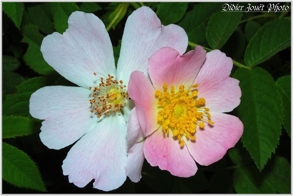 Fleurs en beauté !