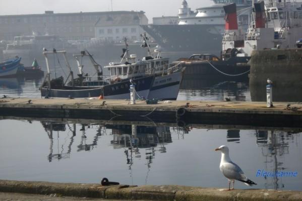 Brest-port_02.JPG