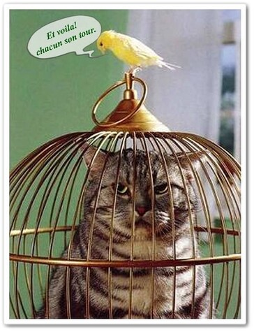 **  Des belles Gages d' oiseaux & des Oiseaux en Liberté..**