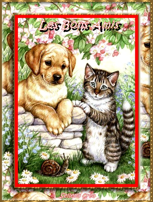 **Mes Amours**Chats-chiens