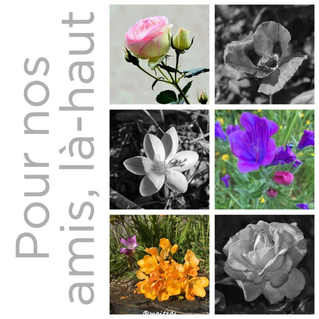 Les fleurs de l'amitié ©maiteds